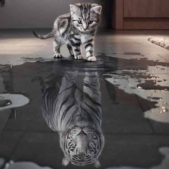 petit chat qui se voit tigre